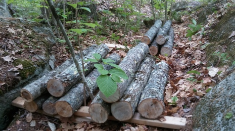Oak logs inoculated with Blue oyster, Lion's Mane, and Shiitake