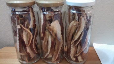 Ganoderma tsugae dried slices