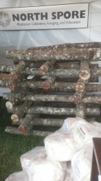 Mushroom logs at the Common Ground Country Fair