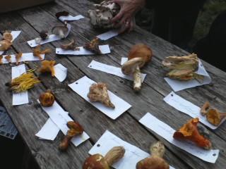 Mushroom Class w/ Nova Kim